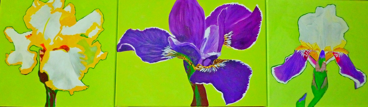 "Iris triptych - acrylic on canvas - 12x40"" - $600."
